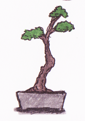 Leere Bonsai