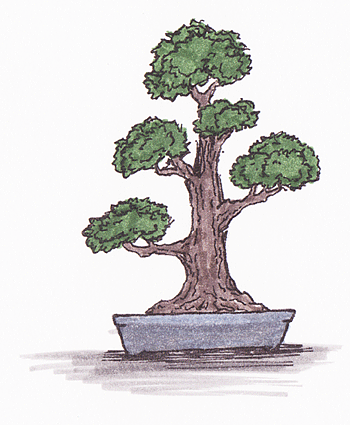 Bonsai Gestalten bonsai gestaltung